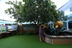 IMG_9832 (Raypower) Tags: singapore phuket cruise royalcaribbean mariner hawkermrkets botanichardens gardens marinabaysands marina sands patong karon escher museum oldtown chinatown canal flower butterfly prayer elephant cockles popiah rojak green