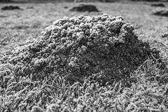 Erster Frost - 0007_Web (berni.radke) Tags: ersterfrost frost raureif wassertropfen rime eisblumen eiskristalle iceflowers icecrystals escarcha