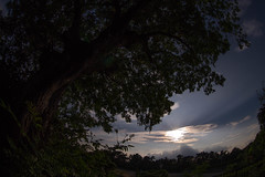 The sun (nak.viognier) Tags: sun ryokuchipark osaka  olympusepl3 lumixgfisheye8mmf35