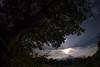 The sun (nak.viognier) Tags: sun ryokuchipark osaka 緑地公園 olympusepl3 lumixgfisheye8mmf35