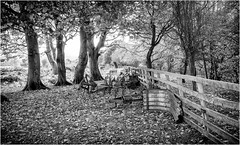 Stainton . (wayman2011) Tags: canon5d lightroom wayman2011 bwlandscapes mono trees fences autumn leaves farmmachinery pennines dales teesdale stainton countydurham uk