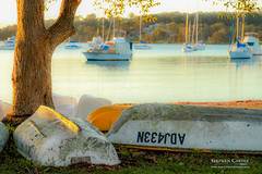 IMG_0563-2 (Scart Photography) Tags: valentine lakemacquarie