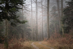 Waldstrasse - Olympus PEN-F (Andreas Voegele) Tags: olympus olympuspenf penf pen andreasvoegelephoto sun light color forest trees autumn search waldstrasse wald licht landscape fog samyang