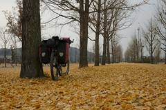 South Korea on Bike (Franzz11) Tags: autumn yellow trees red forest clouds tree beautiful bike bycicle leaves herbst rower biketour fahrradtour jesien south korea asia bicycle sdkorea poudniowa te licie