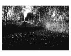 Worpswede Moor # 7 (bruXella & bruXellius) Tags: moor marsh bog marais winter landscape worpswede blackandwhite blackwhite monochrome grain grainy leicax1