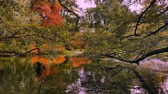 Autumn reflections (louise peters) Tags: pond autumn fall vijver herfst leaves bladeren colorful jleurrijk trees water ducks eenden bomen takken park reflections reflectie