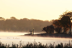 Pacefulness (Mardoqueo Charuc) Tags: landscape paisaje paysage lago lake lagos amanecer sunset rise sunrise silhouettes siluetas goose patos cold photojournalism