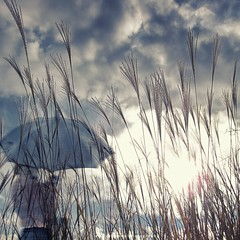 The sun is breaking through (emilioramos59) Tags: textures clouds grass rain umbrella nature walking