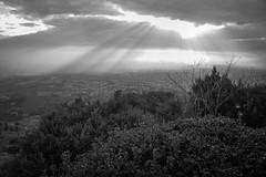 vista, toward Montepulciano, from Cortona, Tuscany, Italy, Nikon D40, Sigma 18-50mm EX DC MACRO, 12.3.16 (steve aimone) Tags: view landscape italianlandscape sunlight rays sun cortona tuscany toscana italy nikond40 sigma1850mmexdcmacro blackandwhite monochrome monochromatic