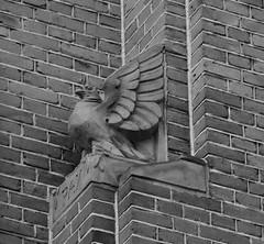 (Miranda Ruiter) Tags: rotterdam blackandwhite photography ornament eagle art
