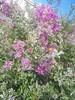 064 (en-ri) Tags: fiorellini flowers foglie leaves sony sonysti