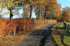 The Path Through Autumn (Alan1954) Tags: nature autumn fall 2016 surrey horsham