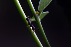 Experimento Macro 1 (Federico_Cedeno) Tags: naturaleza insectos nature insects