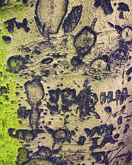 Carvings (lamdogjunkie) Tags: tree love moss carve bark photomatt