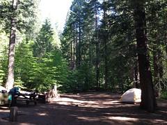 Calaveras Big Trees SP (Justin88) Tags: park trees big oak state calaveras hallows