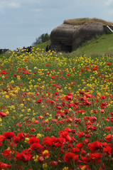 Poppy Field (picturewallah) Tags: poppy poppies normandy dday poppyfields atlanticwall landings landingbeaches
