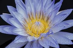 (AZDenney) Tags: flowers gardens flora longwoodgardens publicgardens conservatories arboretums