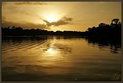 Reflections (WanaM3) Tags: reflection nature water sunrise golden pond texas bayou pasadena canoeing paddling goldenhour armandbayou wanam3 sonya57
