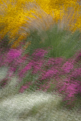 [2013-34] Impressions of a Summer Garden (dreamscaper) Tags: park gardens colorado unitedstates denver multipleexposure flowerbed icm multiplecolors photoimpressionistic