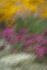 [2013-34] Impressions of a Summer Garden (dreamscaper) Tags: park gardens colorado unitedstates denver multipleexposure flowerbed icm multiplecolors photoimpressionistic