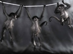 Hang in there (lexiearsenault) Tags: blackandwhite baby white black monkey babies rope swing hanging monkeys hanginthere