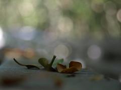 Fall (Shelby's Trail) Tags: fall leaves fence season bokeh rail eightdaysaweek hbw sooc twtme bokehwednesday