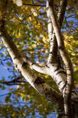 Autumn (Alexey Subbotin) Tags: autumn leaves nikon colours kodak nikkor ai dcs f40 200mm 660c