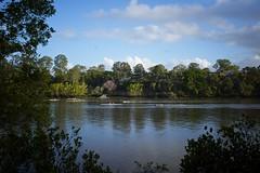 Brisbane River 2013-10-21 (Photos by Rodney) Tags: river fuji australia brisbane rowing brisbaneriver rowers fujix100s x100s