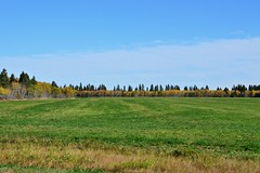 100513-167F (kzzzkc) Tags: trees canada green field nikon day manitoba autumncolors mb68 d7000 pwpartlycloudy