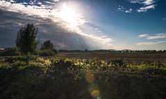 _DSC3121.jpg (Ingeborg Ruyken) Tags: autumn oktober sun tree field clouds october flickr afternoon herfst nederland thenetherlands wolken boom iphoto zon facebook middag natuurfotografie hedel 2013 akkerland welraw catautumnlandscape