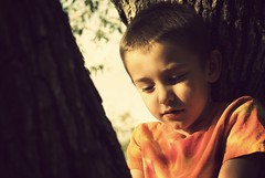 quietness (betsyblue) Tags: orange tree jack glow