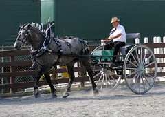 victory lap (mevrain) Tags: horses horse carriage racing cart harnessracing sulky trotting twowheels