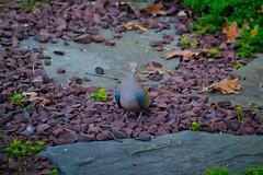 (DigitalCanvas72) Tags: green nature grass leaves birds animal outdoors nikon squirrel rocks feeding 55300mm nikkor55300mmvr d3100 nikond3100