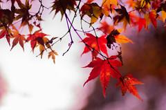 2013-11-24_IMGP0010.jpg (ayagane) Tags: pentax 日本 f18 k5 奈良公園 77mm iso80 奈良県 奈良市 hpexif 13200sec