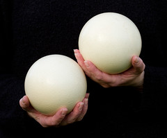 Two Ostrich Eggs (Mukumbura) Tags: woman white black nature holding hands fingers egg cream large ostrich thumbs reproduction gettyimages enormous handful twohands africanostrich