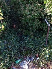 My favorite staircase in town. (Q. Q. Kachoo) Tags: leaves vertical trash garbage vines weeds awesome vert litter everett