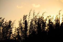 (Ágatha Photography) Tags: canon céu flôres