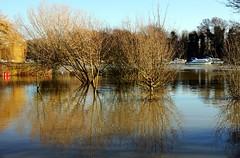 Flower Pot Green Flood Jan 2014 (paulinuk99999 - just no time :() Tags: flower green thames river flooding flood january pot lower 2014 sunbury paulinuk99999