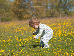 Blonde little boy playing in a meadow full of flowers (Carlos Ciudad - Stock Photography) Tags: flowers trees boy espaa naturaleza baby game flores color primavera nature colors field grass forest hair 1 kid spring spain europa europe long picnic alone arboles child play little year meadow olympus colores leon bosque solo blonde learning campo jugar bebe prado juego rizos infancia nio largo ao pacifier pelo gettyimages pradera buttercups hierba rubio aprender chupete 20months ranunculusacris castillayleon agachado chidlhood e520 20meses botondeoro castilleandleon cctrillastock castromudarra