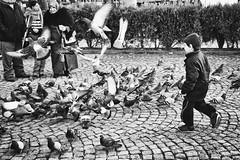 _XPR0920-Edit (Spyros Nannos) Tags: people pigeon streetshots streetphotography gsp candidshots yalova candidportraits xpro1 fujixpro1