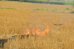 Fire in Field - Chiniot