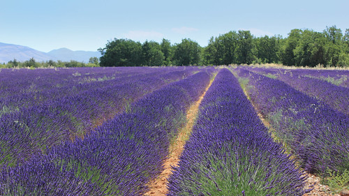 Es pas bèu ço qu'es bèu, es bèu ço qu'agrado... (Plateau de Valensole France).