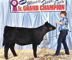 "Res. Div Champion IL State Fair Jr Show; Div Champion Maintainer Open Show '13 • <a style=""font-size:0.8em;"" href=""http://www.flickr.com/photos/25423792@N05/14251852320/"" target=""_blank"">View on Flickr</a>"