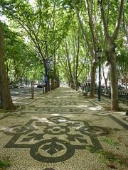 leicht und luftig-light and airy (Anke knipst) Tags: tree portugal plane alley lisbon cobblestone lissabon baum allee platane kopfsteinpflaster