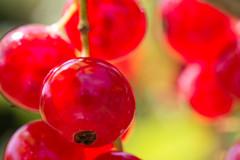 Johannisbeere / redcurrant (chrisar676) Tags: red macro rot closeup canon garden eos makro garten currant redcurrant johannisbeere 60d