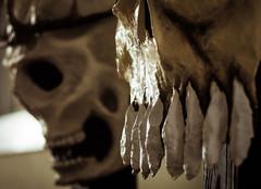Mardi Gras masks (Brother O'Mara) Tags: skull louisiana mask head neworleans mardigras papiermache skullmask