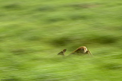 Plunge (Ramesh Adkoli) Tags: landscape wildlife corbett dhikala capturenx d800e