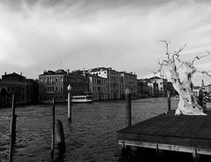 El Gran Canal (John LaMotte) Tags: venecia venezia venice canales infinitexposure italia blancoynegro bw blackwhite pretoebranco monocromo