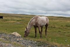 DSC_4957-Edit (claudiu_dobre) Tags: newfoundland canada eastcoast dungeons provincial park horse elliston newfoundlandandlabrador ca