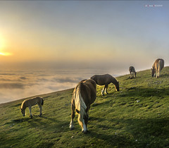 Goizean goiz (Jabi Artaraz) Tags: jabiartaraz jartaraz zb euskoflickr yeguas potros gorbea natura airelibre amanecer animales animaux animals